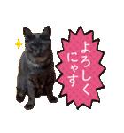 リアルにゃんこ!みかげ & チャー 2(個別スタンプ:03)