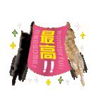 リアルにゃんこ!みかげ & チャー 2(個別スタンプ:04)