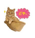 リアルにゃんこ!みかげ & チャー 2(個別スタンプ:05)