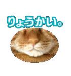 リアルにゃんこ!みかげ & チャー 2(個別スタンプ:09)