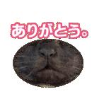 リアルにゃんこ!みかげ & チャー 2(個別スタンプ:10)
