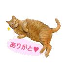 リアルにゃんこ!みかげ & チャー 2(個別スタンプ:11)