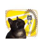 リアルにゃんこ!みかげ & チャー 2(個別スタンプ:13)