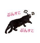 リアルにゃんこ!みかげ & チャー 2(個別スタンプ:15)