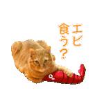 リアルにゃんこ!みかげ & チャー 2(個別スタンプ:22)