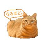 リアルにゃんこ!みかげ & チャー 2(個別スタンプ:27)