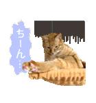 リアルにゃんこ!みかげ & チャー 2(個別スタンプ:29)