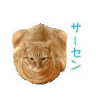 リアルにゃんこ!みかげ & チャー 2(個別スタンプ:30)