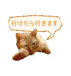 リアルにゃんこ!みかげ & チャー 2(個別スタンプ:31)