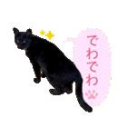 リアルにゃんこ!みかげ & チャー 2(個別スタンプ:40)