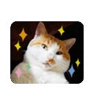 猫のうるちゃくん(個別スタンプ:01)