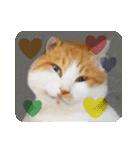 猫のうるちゃくん(個別スタンプ:02)