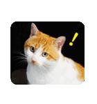 猫のうるちゃくん(個別スタンプ:05)
