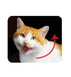 猫のうるちゃくん(個別スタンプ:06)
