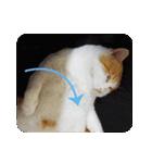 猫のうるちゃくん(個別スタンプ:07)