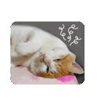 猫のうるちゃくん(個別スタンプ:08)