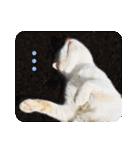 猫のうるちゃくん(個別スタンプ:09)