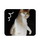 猫のうるちゃくん(個別スタンプ:10)
