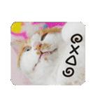 猫のうるちゃくん(個別スタンプ:11)