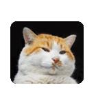 猫のうるちゃくん(個別スタンプ:12)