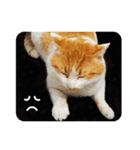 猫のうるちゃくん(個別スタンプ:13)