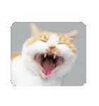 猫のうるちゃくん(個別スタンプ:14)