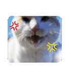 猫のうるちゃくん(個別スタンプ:15)