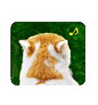 猫のうるちゃくん(個別スタンプ:16)