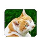 猫のうるちゃくん(個別スタンプ:17)