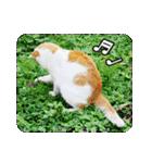 猫のうるちゃくん(個別スタンプ:18)