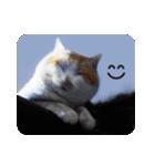 猫のうるちゃくん(個別スタンプ:19)
