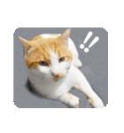 猫のうるちゃくん(個別スタンプ:20)