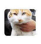 猫のうるちゃくん(個別スタンプ:21)