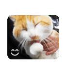 猫のうるちゃくん(個別スタンプ:22)