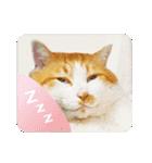 猫のうるちゃくん(個別スタンプ:23)
