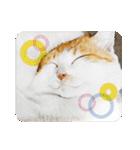猫のうるちゃくん(個別スタンプ:24)
