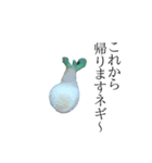 ネギの写真スタンプ(個別スタンプ:11)