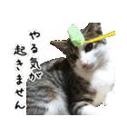 キジ白にゃんこ【リアル】(個別スタンプ:10)