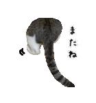 キジ白にゃんこ【リアル】(個別スタンプ:40)