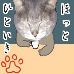 続・コミカルにゃんこ(写真+イラスト)
