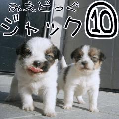 [LINEスタンプ] みえどっぐスタンプ ジャックラッセル編 10