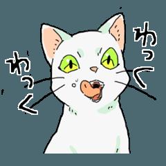 MIX 白猫【ねこのきもち】