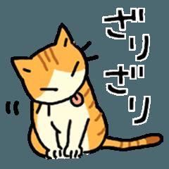 MIX猫 茶×白【ねこのきもち】