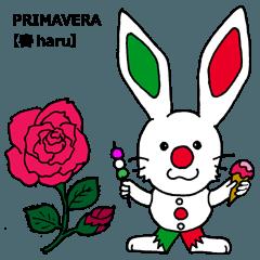 伊日amo~ウサギがつなぐイタリア日本 (春)