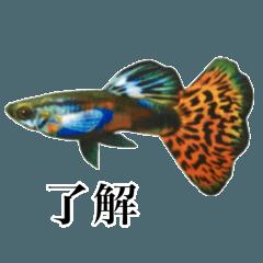 使いやすい熱帯魚と淡水魚
