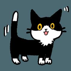 MIX猫 黒×白【ねこのきもち】