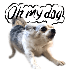 犬トーク!!!多国籍編 写真