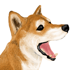 [LINEスタンプ] 王道の犬!柴犬