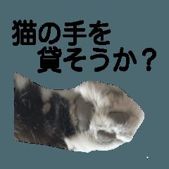チコニャン〜実写スタンプ〜