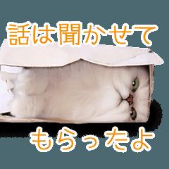 ネコ達の日常